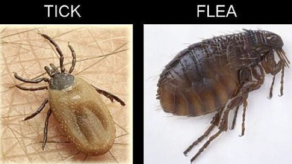 Why is protecting your pet against fleas and ticks so important?